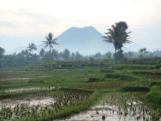 Reisfeld mit Vulkan