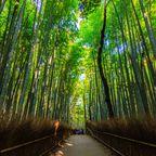 10 tolle Reiseziele zu Weihnachten: Kyoto