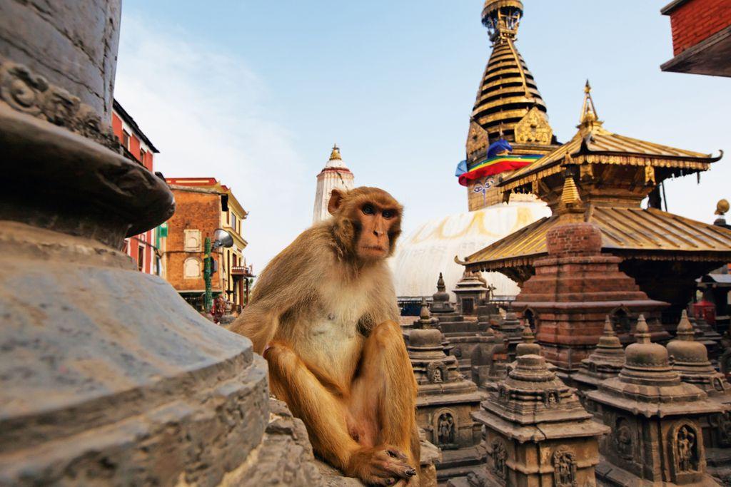 Tollwut-Impfung ist für Nepal-Urlauber Pflicht