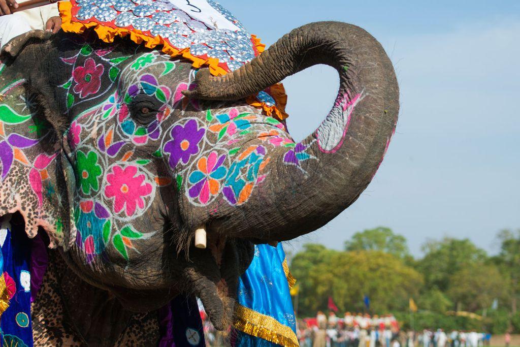 Das Elefantenfest Perahera in Kandy ist ein absolutes Reisehighlight