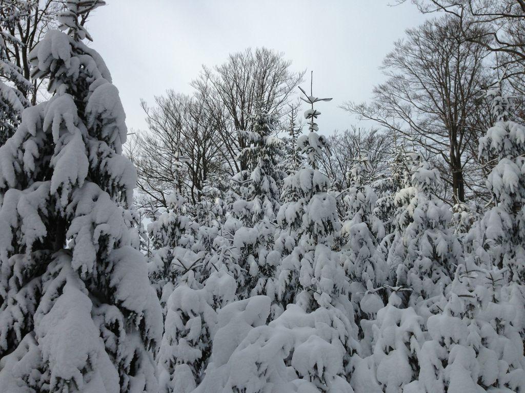 Wintergeist