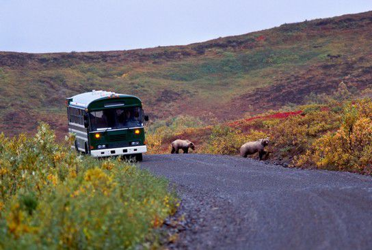 Grizzly on thr road