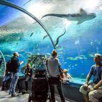 Unterwassertunnel im Aquarium, Kopenhagen