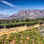 Highlights der Rundreise durch Südafrika: Winelands