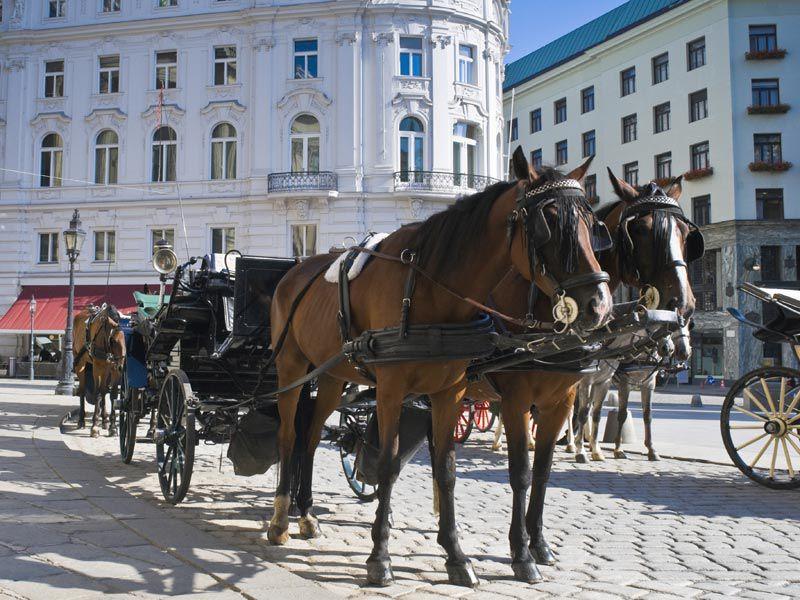 Romantisches Highlight in Wien ist eine Kutschfahrt.
