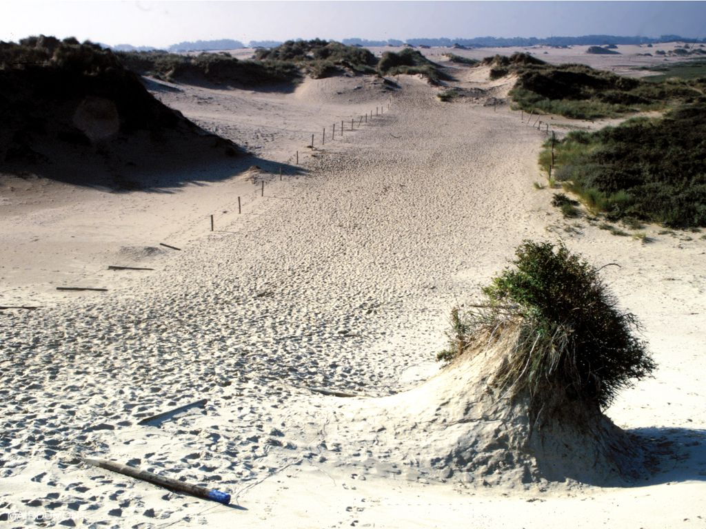 Duinen van De Westhoek