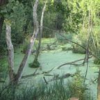 Natur pur im Landschaftspark Duisburg