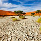 Zurück zur Bilderübersicht Afrika