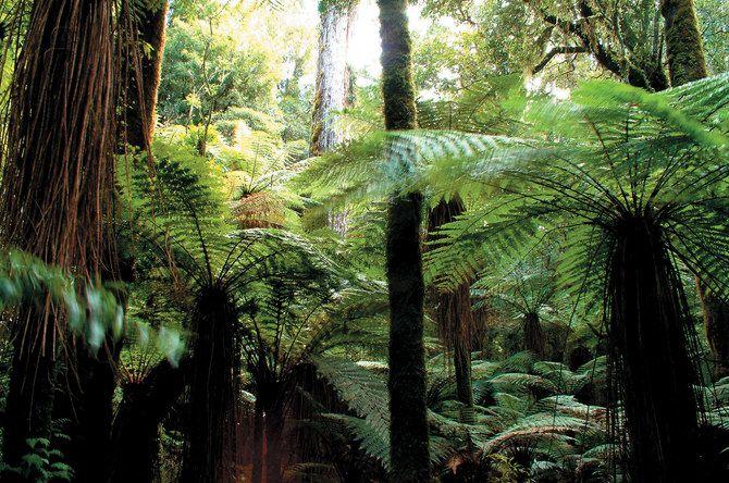 Reiche Flora und Fauna