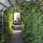 Laubengang im Garten von Schloss Läckö