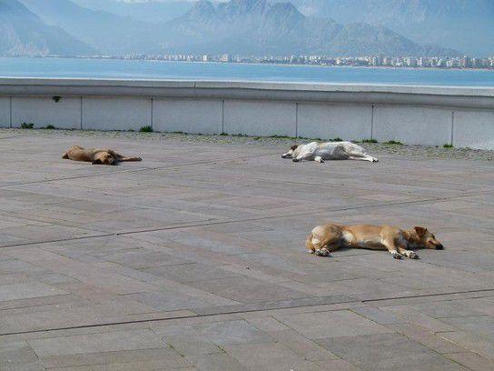 Herrenlose Hunde beim Mittagsschlaf