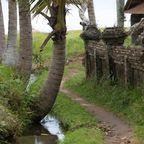 Wanderung um Ubud auf Bali