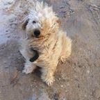 Windiger Hund