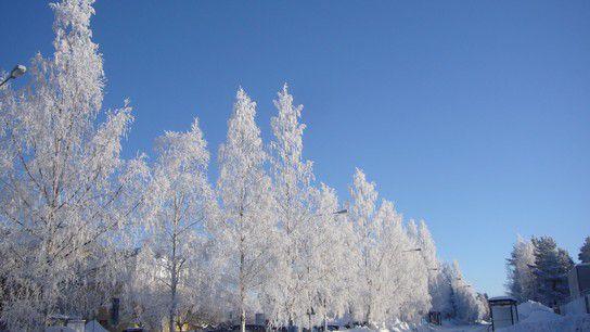 Umea im Frost