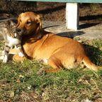 Hund und Katze - die besten Freunde