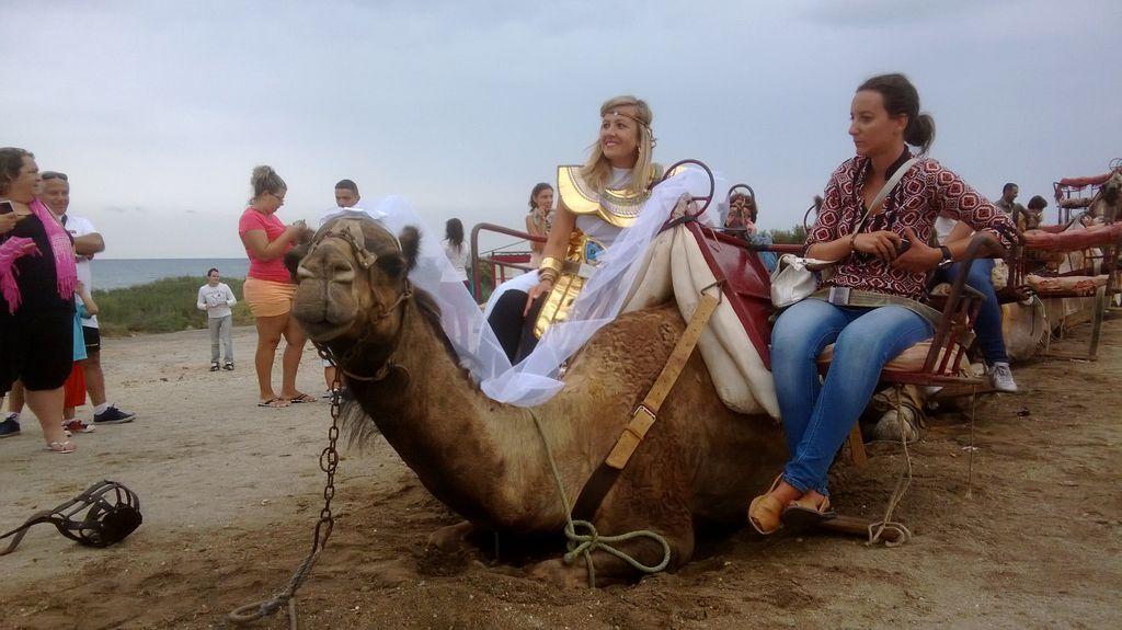 Hübsche Kamelstute mit eleganten Reiterinnen