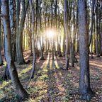 Herbstlicher Hochuferwald