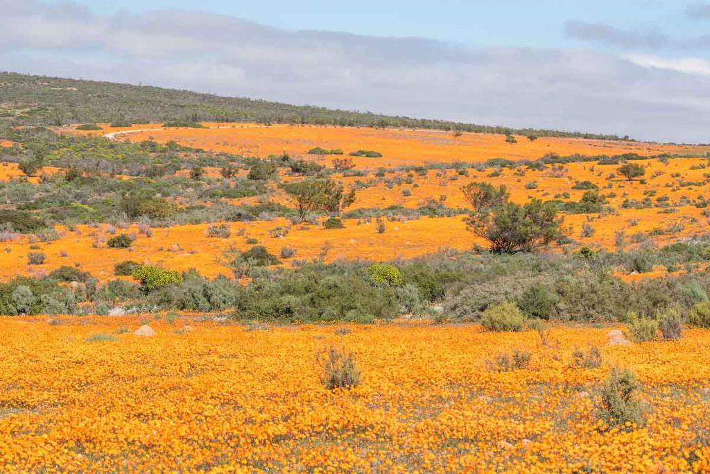 Das Namaqualand