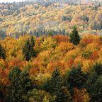 Zurück zur Bilderübersicht Bayerischer Wald