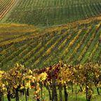 Eines der vielen Weingüter der Toskana
