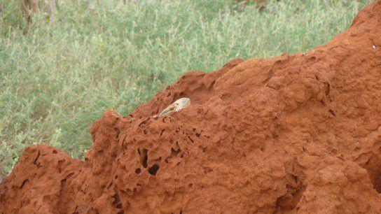 Tsavo Ost - Termitenhügel