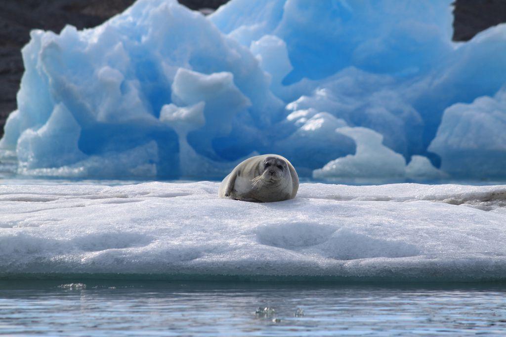 Pause auf dem Eis
