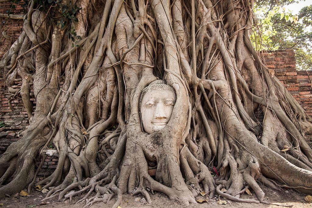 Thailand: Sandstein-Buddha im Feigenbaum in Ayutthaya