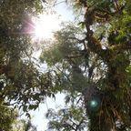 Die Sonne blitzt durch den Urwald