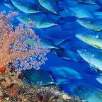 Karibische Unterwasserwelt