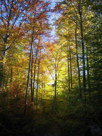 Herbstfärbung in Mössingen