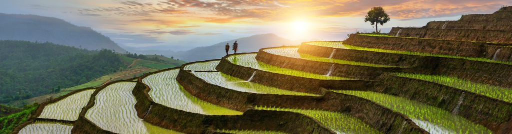 Sonnenuntergang über den Pa-pong-peang Reisterrassen im Norden Thailands
