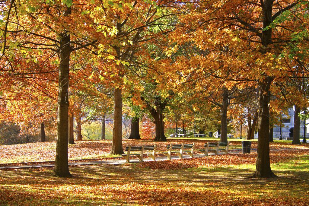 Boston Public Garden im Herbst