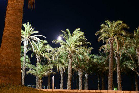Der Strand von Torremolinos bei Nacht