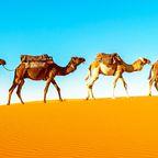 Kamel-Karavane in der Sahara