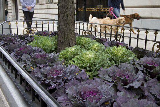 New York Pflanzen Deko