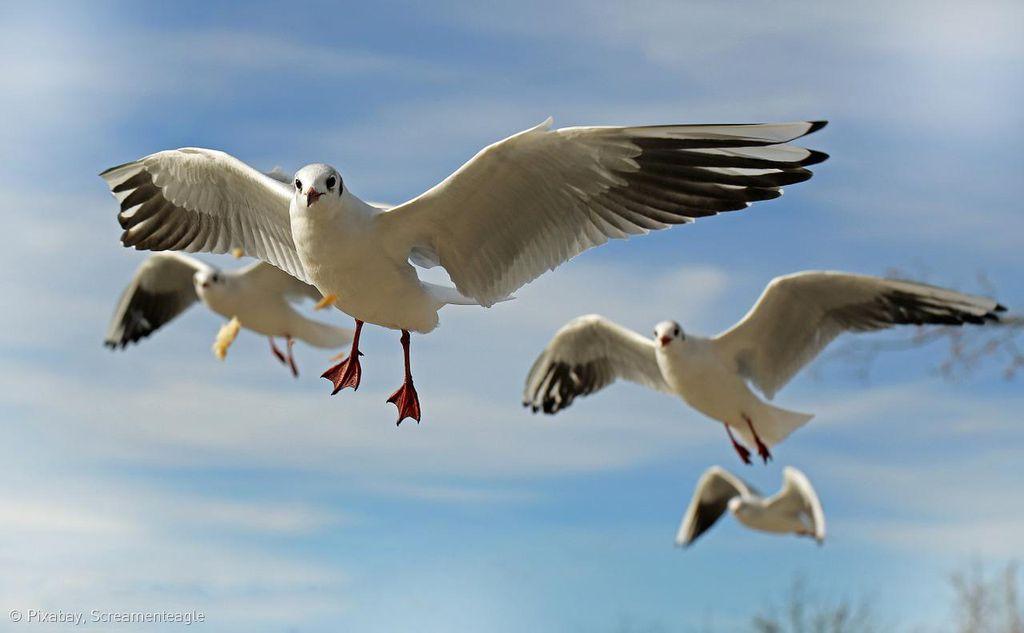 """Küstenwanderung zum Vogelparadies """"Het Zwin"""""""