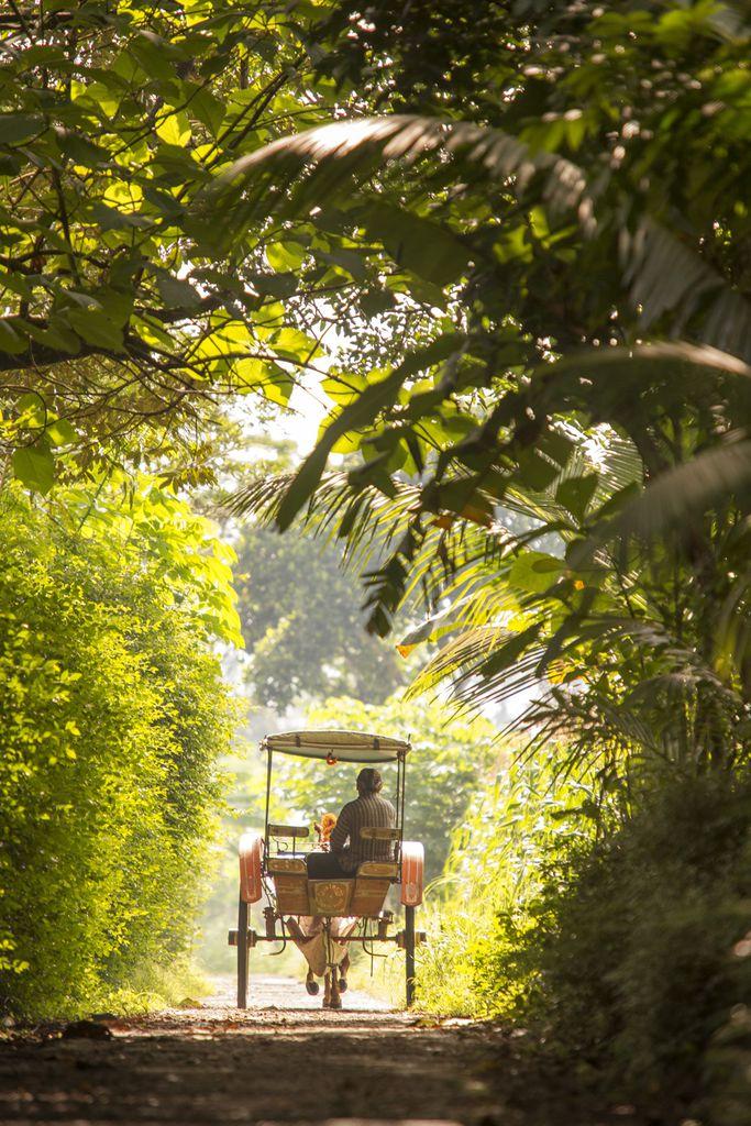 Pferd und Wagen nahe Borobudur