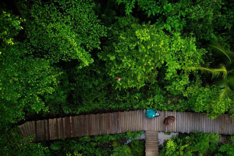 Mangrovenwald auf Pulau Ubin