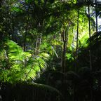 Dschungellicht
