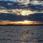 Seevögel erfreuen sich am Sonnenuntergang