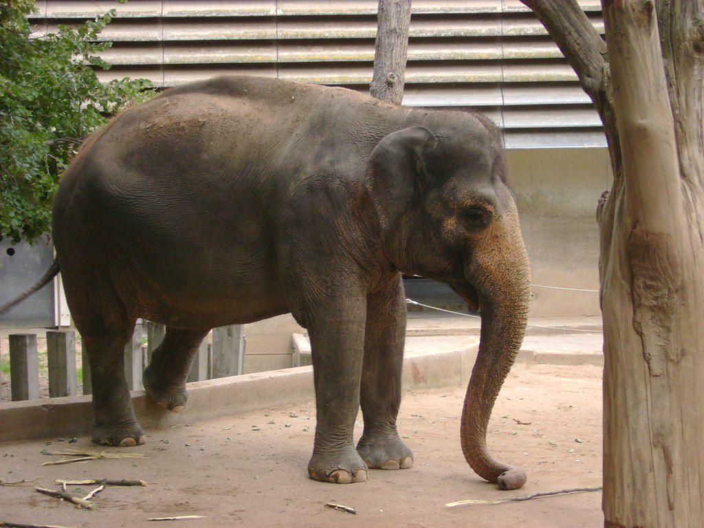 Elefant in der Wilhelma Stuttgart