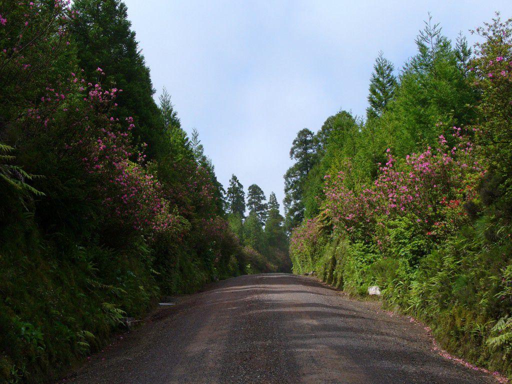 Straße, Azoren SMI