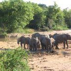 Elefanten Yankari National Park