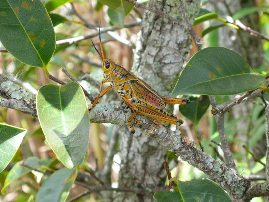 world Everglades Florida