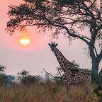Zurück zur Bilderübersicht Uganda