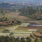 Reisterrassen in Madagaskar