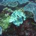 Reiche Korallenriffe
