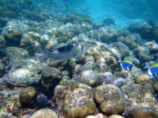 Korallen in allen Formen und Farben