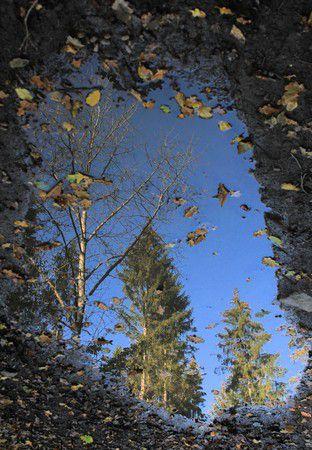 Herbst-Tümpel