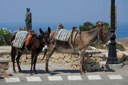 Esel-Taxi